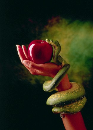 Snake and Forbidden Fruit